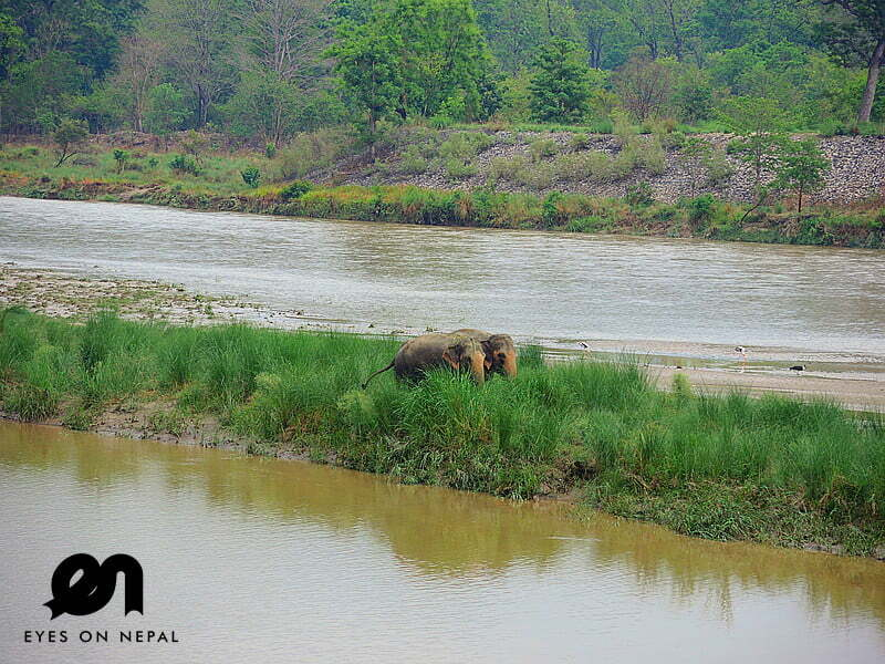 Paradise or Hell? I visited Bardia National Park in Nepal